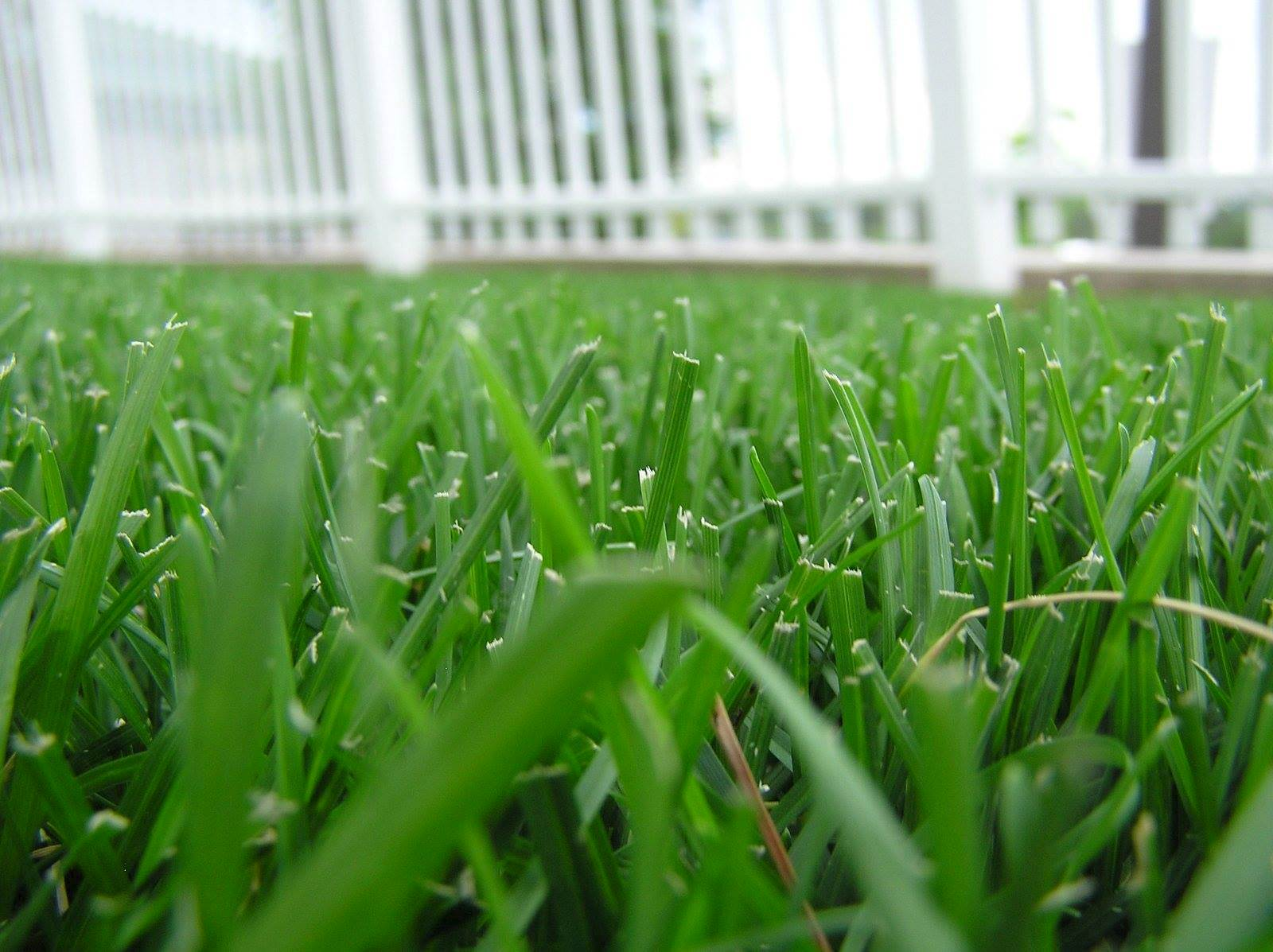 grass photo: Free Images.com/Colin Smith