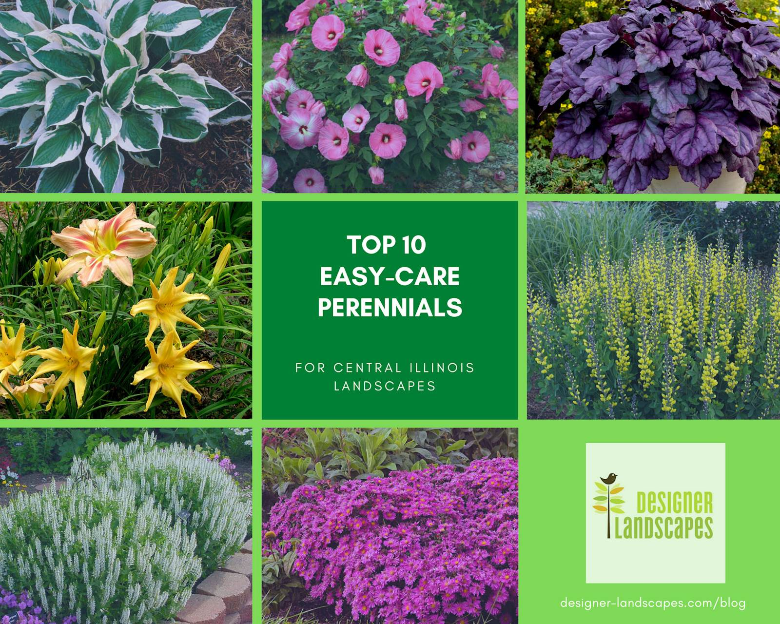 Top 10 Best Perennials For A Central Illinois Landscape Designer